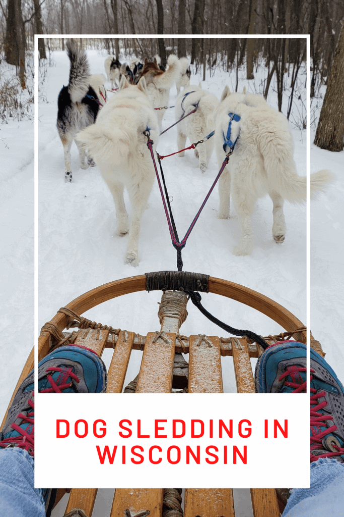 """Pinterest pin with text """" Dog sledding in Wisconsin """" and dog sled with dogs ahead of it in the snow"""