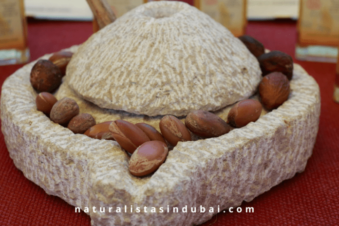 Argan seeds in a stone mill ready for extraction