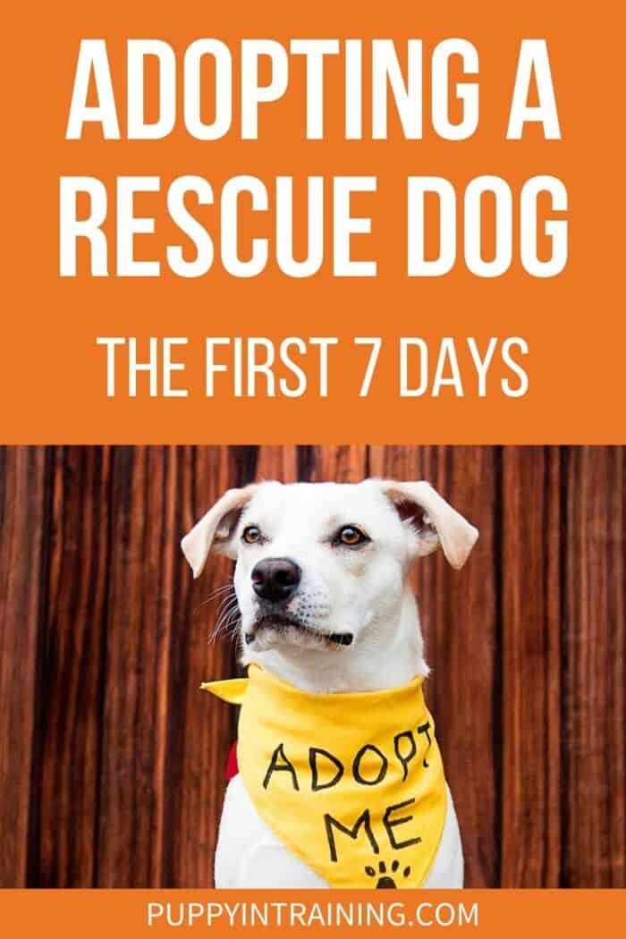 Adopting A Rescue Dog: The First 7 Days - White Dog wearing an adopt me bandana