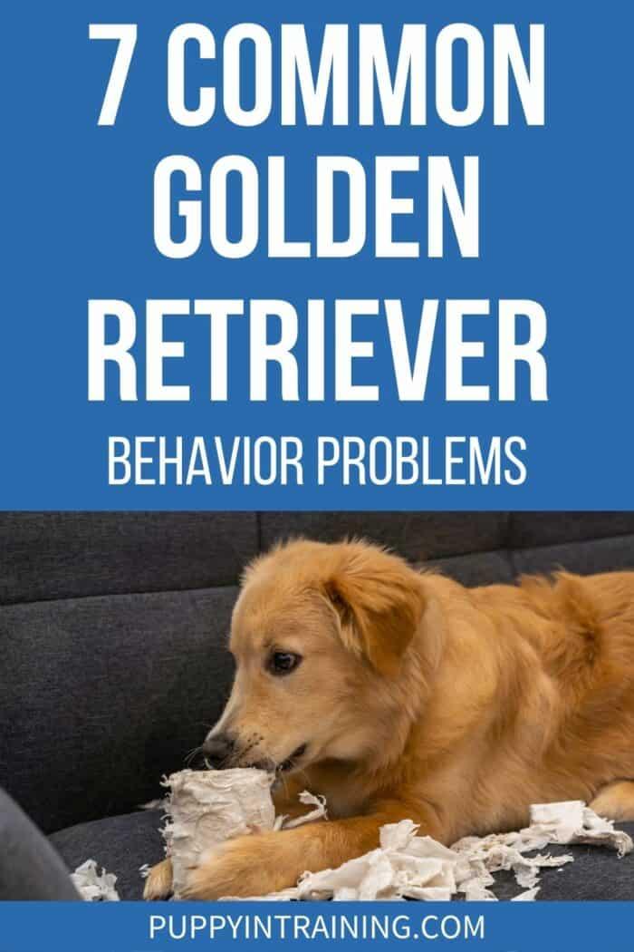 7 Common Golden Retriever Behavior Problems - Golden Retriever chewing on paper towels