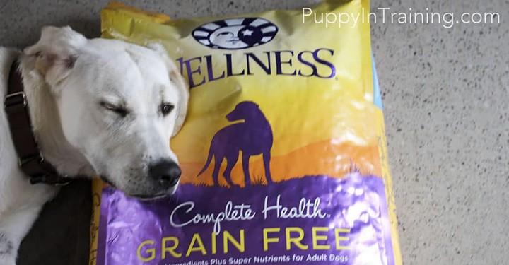 Wellness Dog Food Pillow?