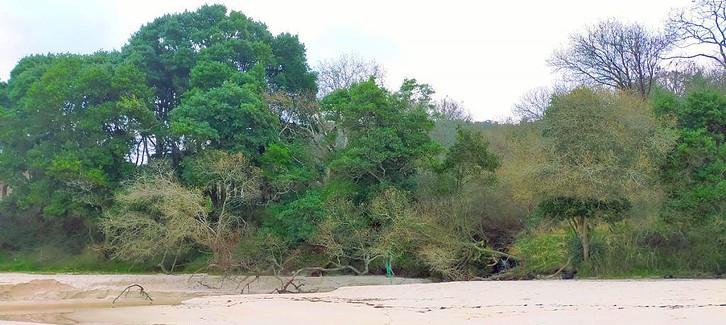 Pantalla de frondosa vegetación en Lampamán