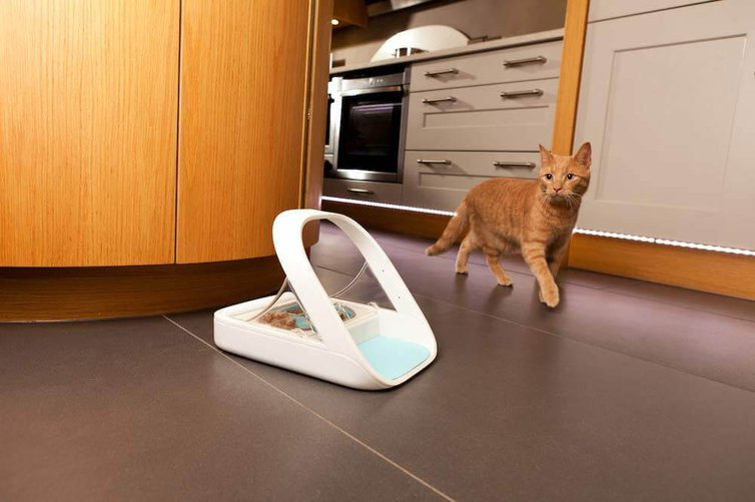 distributeur pour chat surefeed