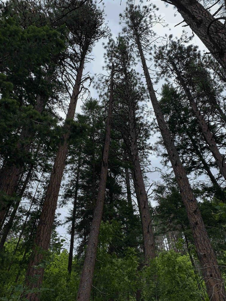 Hiking in Spokane: Trails the Whole Family Will Enjoy