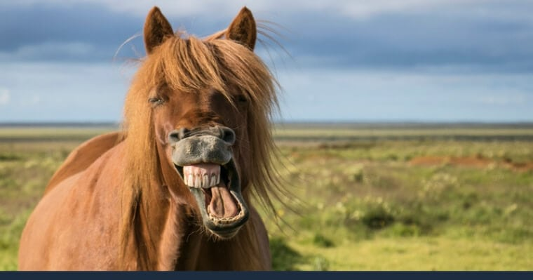 gigi kuda