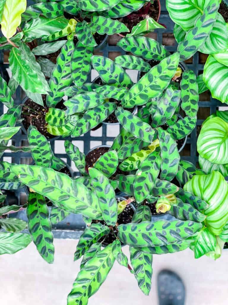 Ritters Garden and Gift Spokane
