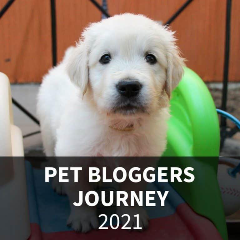 Pet Bloggers Journey 2021