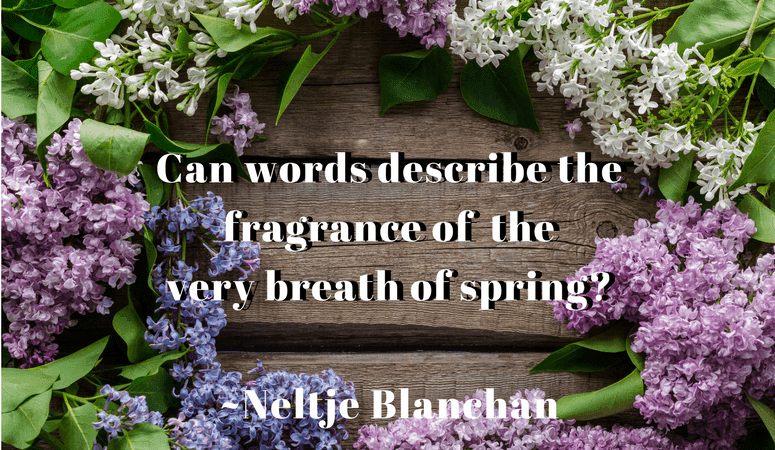 lilac flowers on a wooden board with quote that says Can words describe the fragrance of the very breath of spring? ~Neltje Blanchan