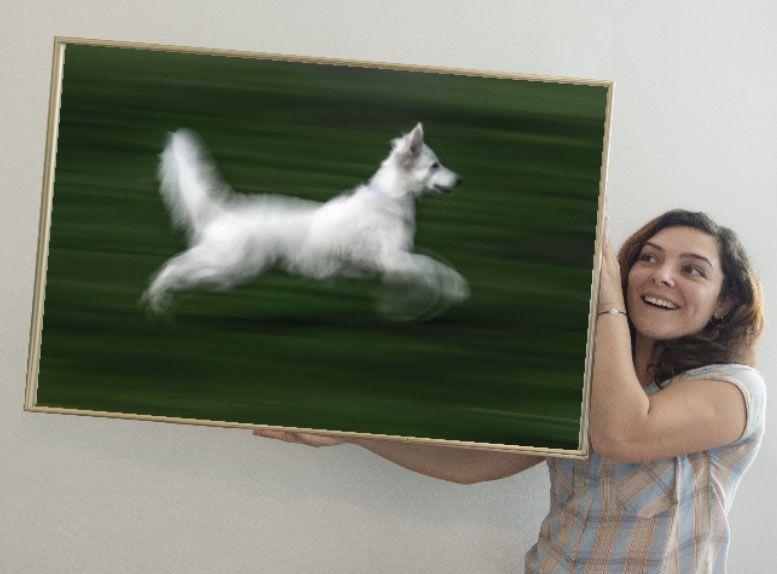 el perro blanco 100 xisco fuster fotógrafo