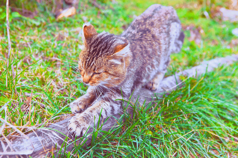 Cat spending time outdoors