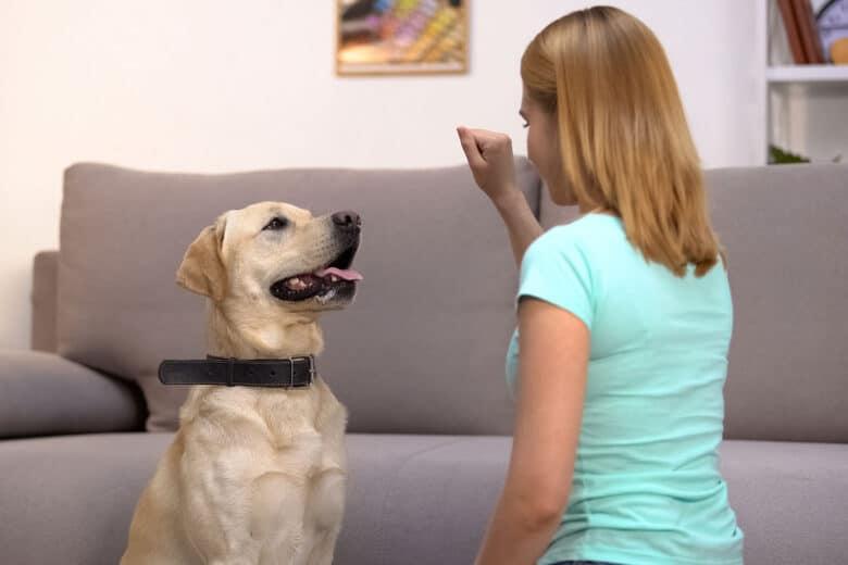 Basic dog commands