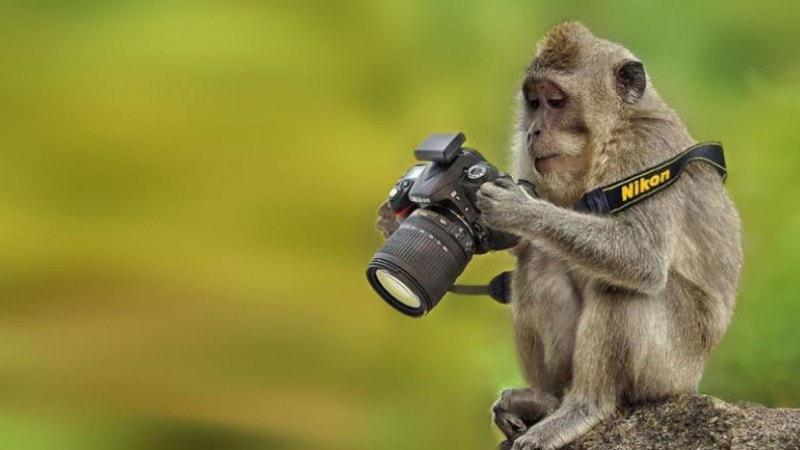 Monkey with camera