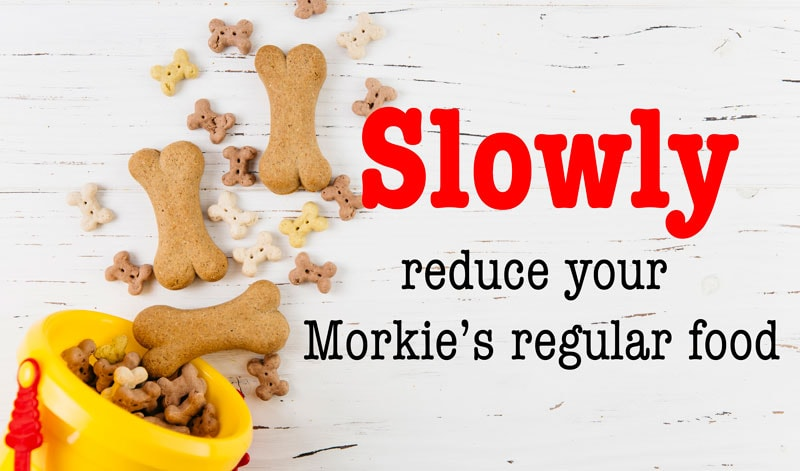 slowly reduce your morkie's food