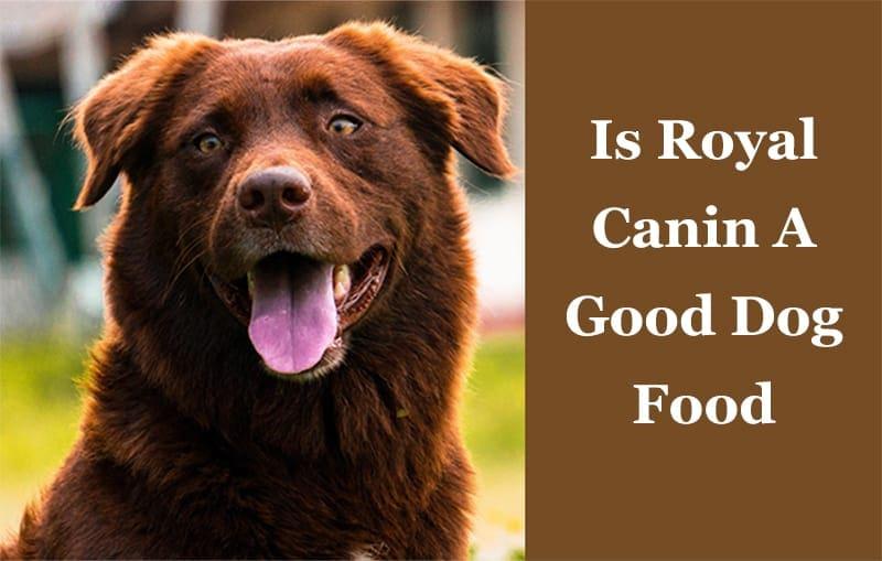 Is Royal Canin A Good Dog Food