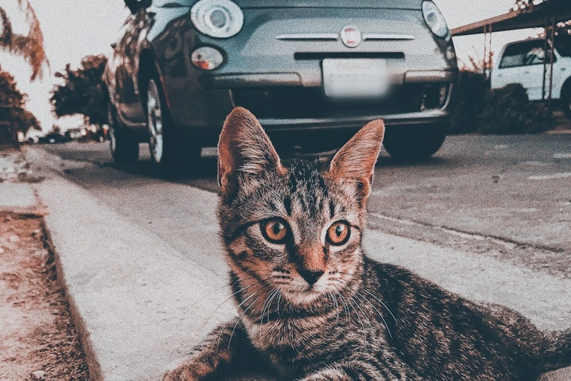 image of a cat and a car in the background during a trip