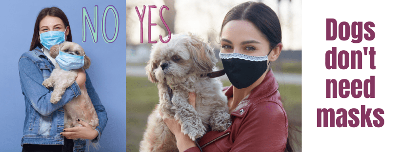 dogs don't need masks