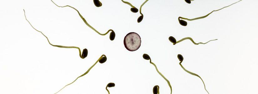 Infertiliteit en de klassiek homeopathische behandeling