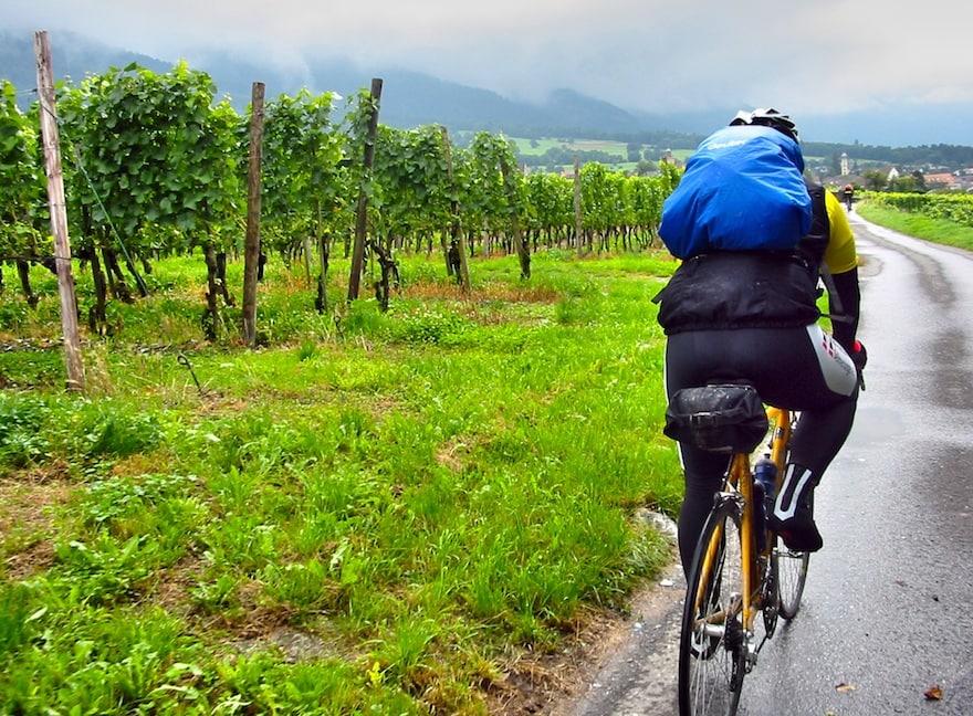 A cyclist riding among vineyards