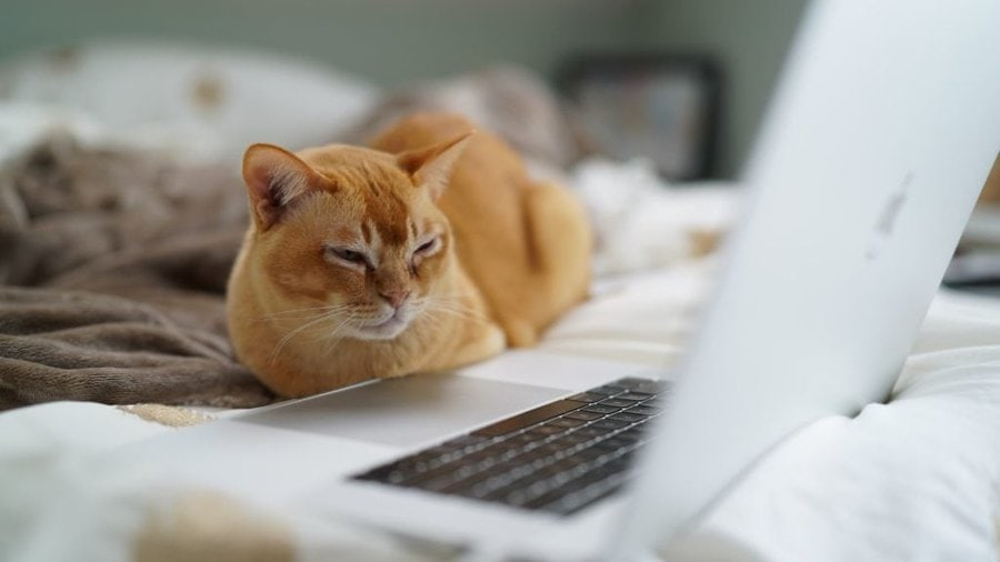 cat in front of computer