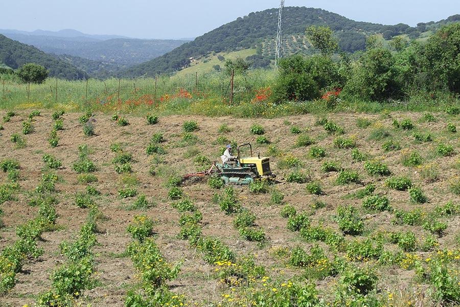 Los suelos en los viñedos