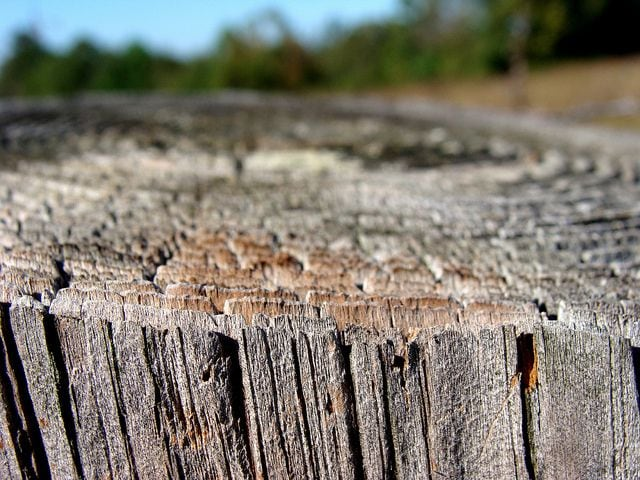 fencepost. showing growth rings by Martin LaBar. Creative Commons cc-by-nc 2 licence.
