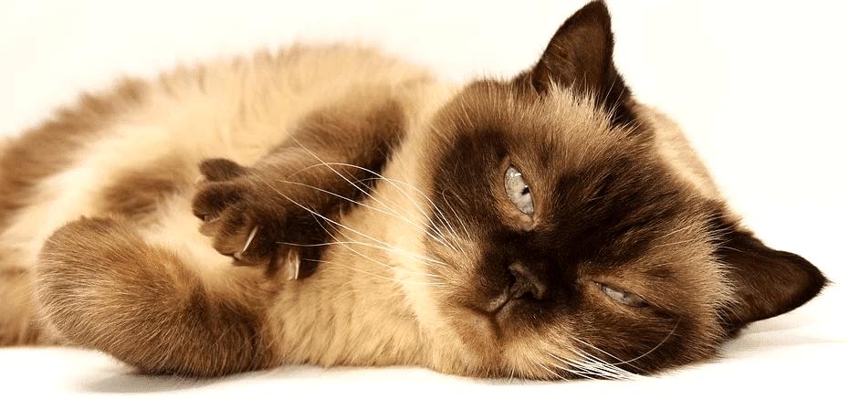 croquettes pour chat obèse