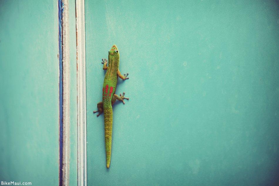 gecko wall vintage