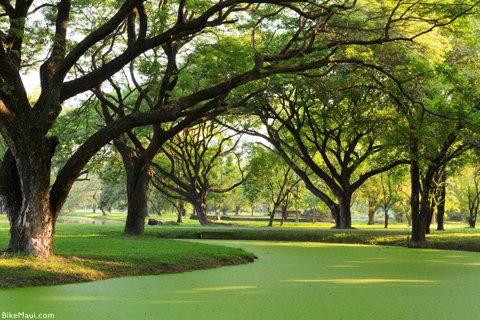 Monkeypod golf course