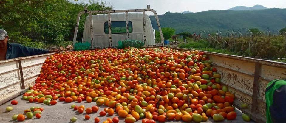 Donación de tomates para Guastatoya