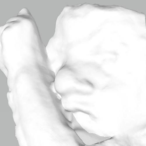 3D Baby Model
