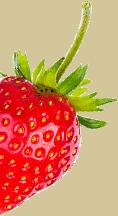 Transparent image strawberry