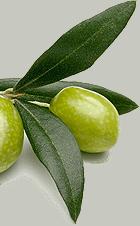 Bio oliwki