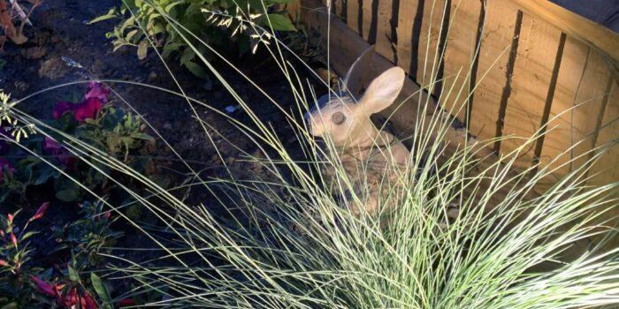 Lighting rabbit in grass