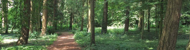 Afbeelding van een bos