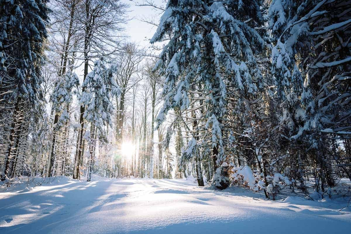 2017-01-22-Winterwald_013