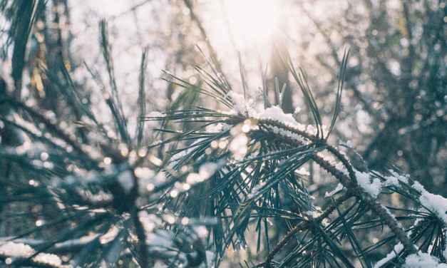 Jongeren verhalen tijdens wintersport veel schade op hun reisverzekering