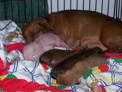 Pink The Piglet sleeping
