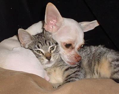 Puppy vs Kitty 1