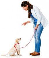 A woman training a Labrador