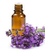 Lavendar oil and lavender flowers on white background