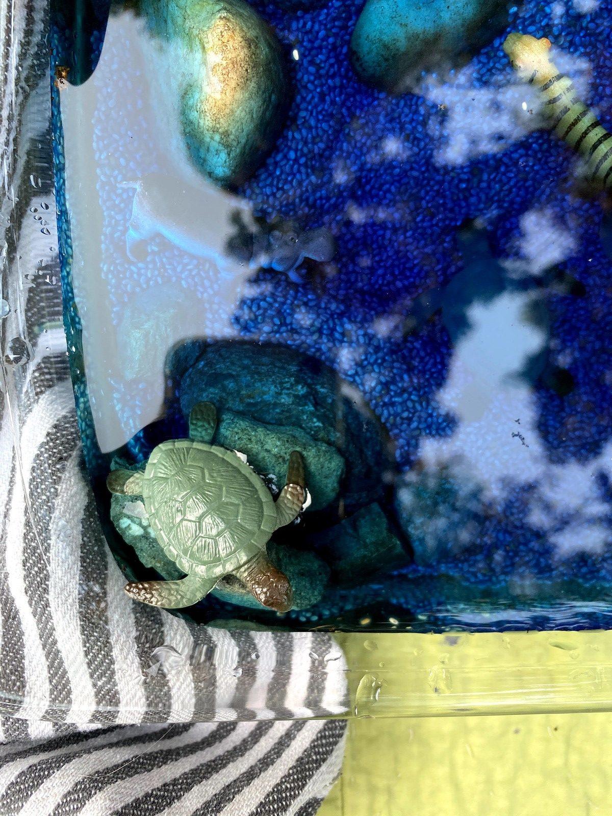 Swimming Animals Activity WinterKids IMG 7519