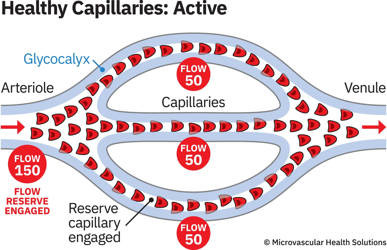 cap-healthy-active-MHS-1500