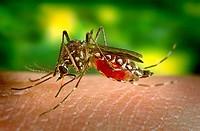 Chikungunya Virus in Bangladesh National Guideline Symptoms Treatment