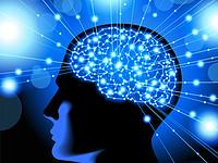 بهترین خوراکی برای تقویت حافظه | برای تقویت حافظه چه بخوریم؟