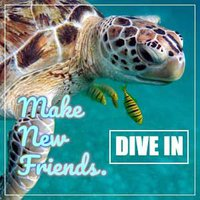 Travel to make new friends with diving.