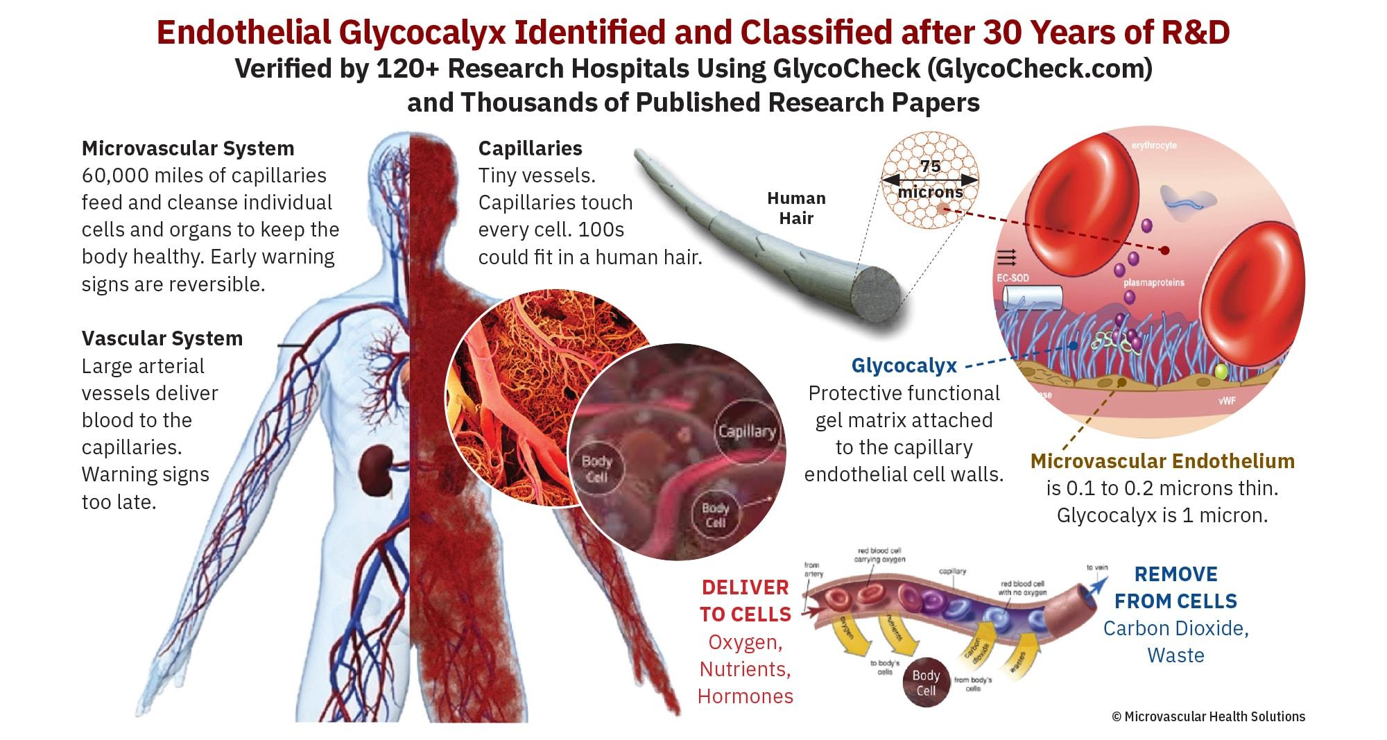 Glycocalyx-infographic-Nov20