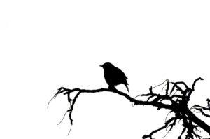 bird-313612_960_720