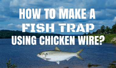How to Make A Fish Trap Out of Chicken Wire