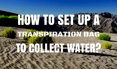 How to Set up a Transpiration Bag to Collect Water?