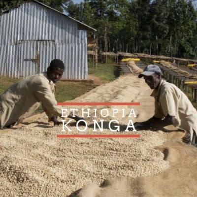 Konga - Badger & Dodo